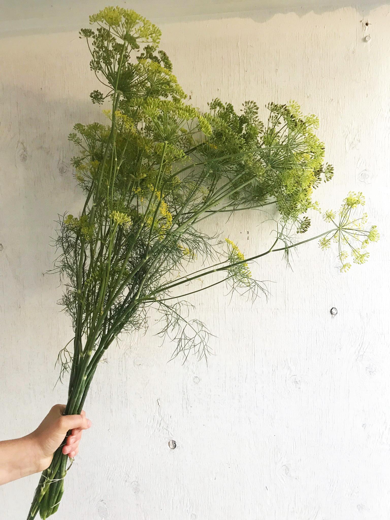 Dill - Bouquet