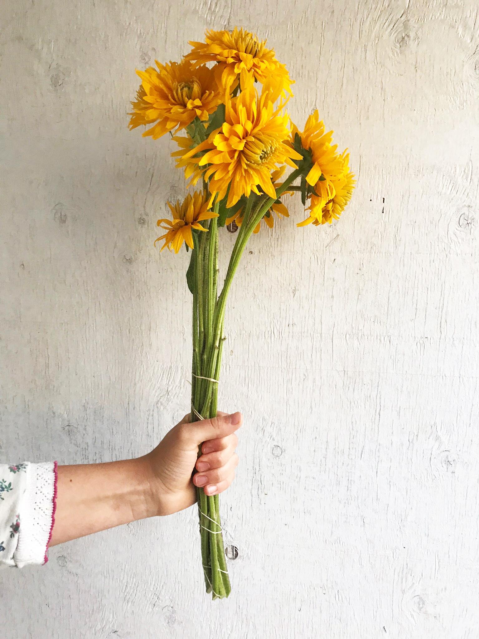 Rudbeckia - Gloriosa