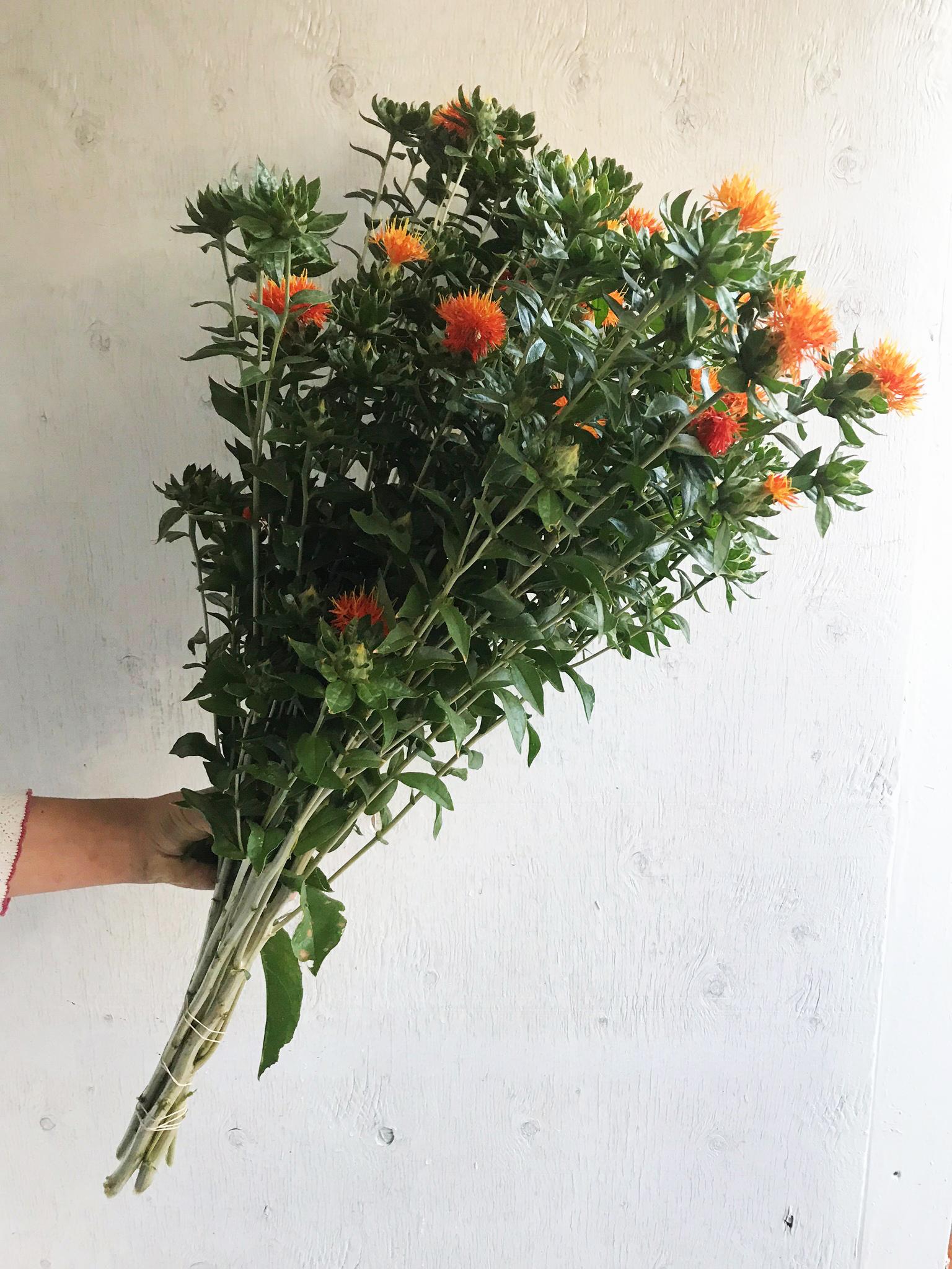 Safflower - Superior Orange