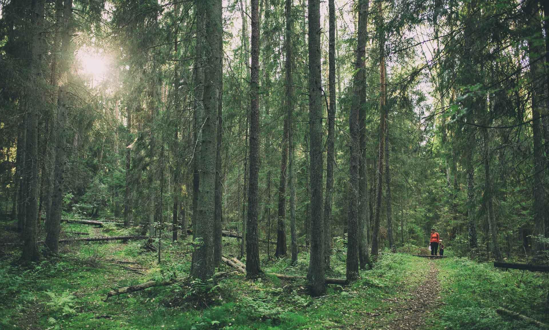 Metsässä, 2016