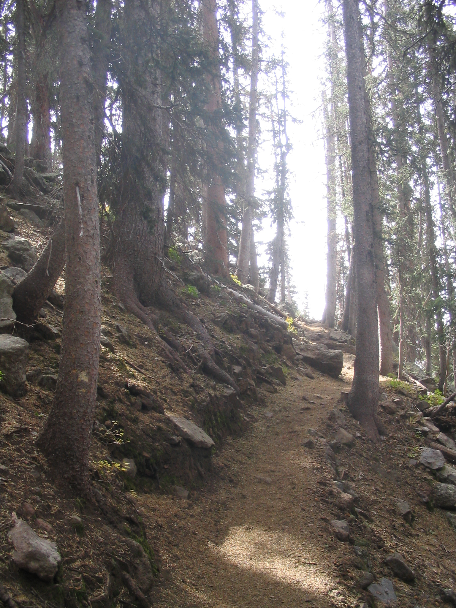 The Path Laid Out Ahead - Humphrey's Peak, AZ