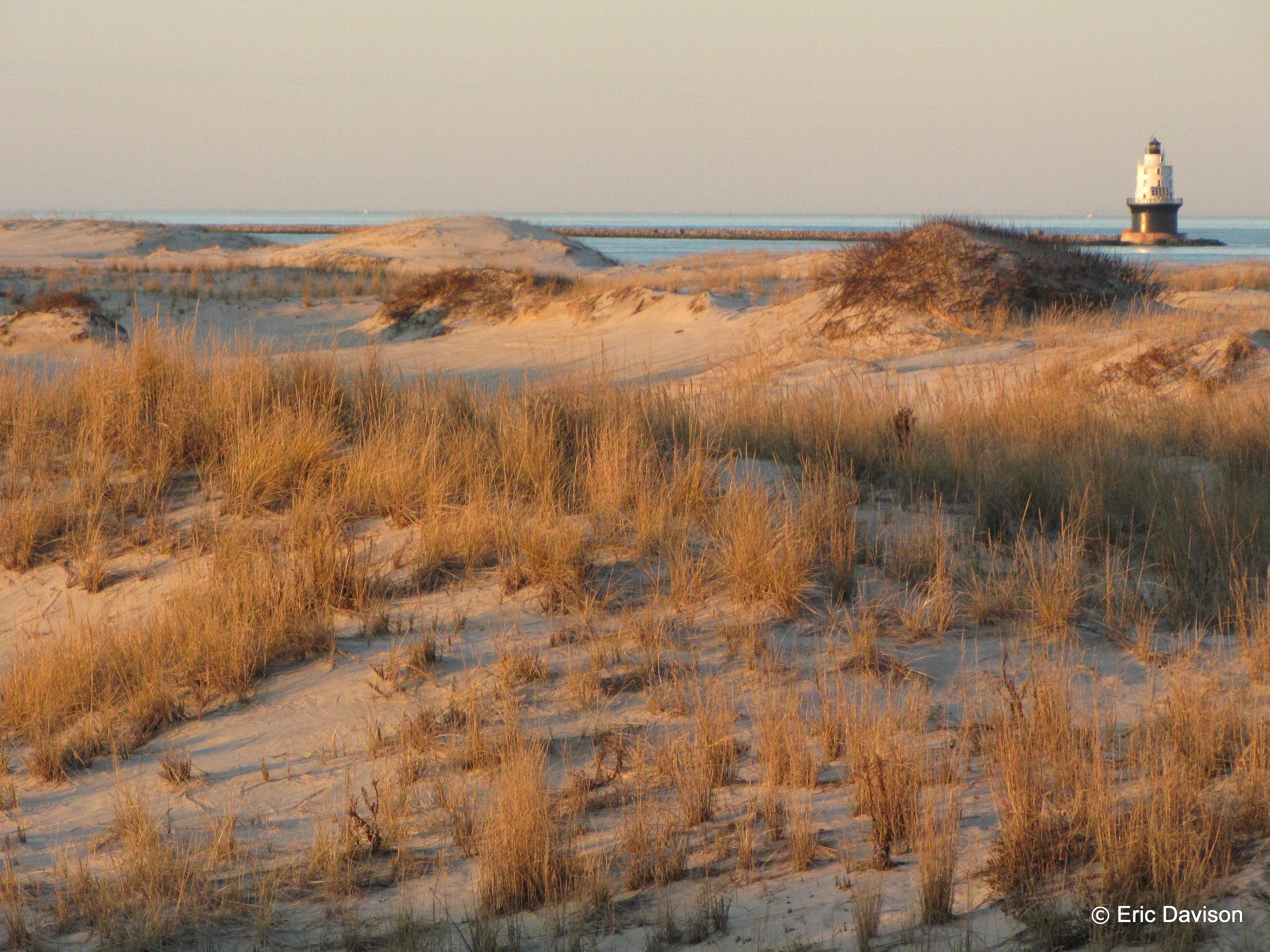Where Bay Meets Sea - Cape Henhelopen, DE