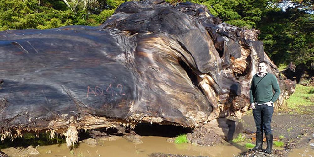 timber-mountains-b.jpg