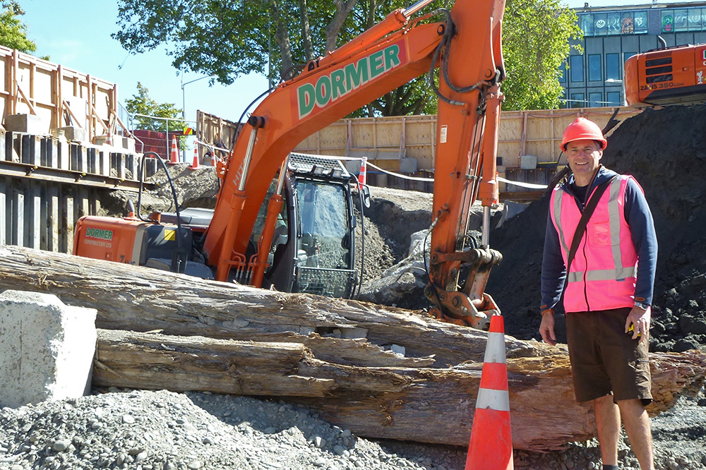 Totara trees salvaged during earthworks for the new ANZ Centre on Colombo St, Christchurch.