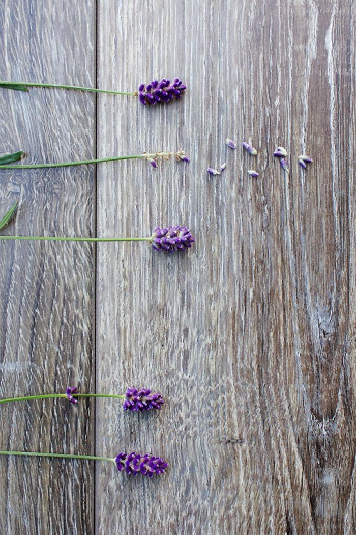 StillLife_Lavender.jpg