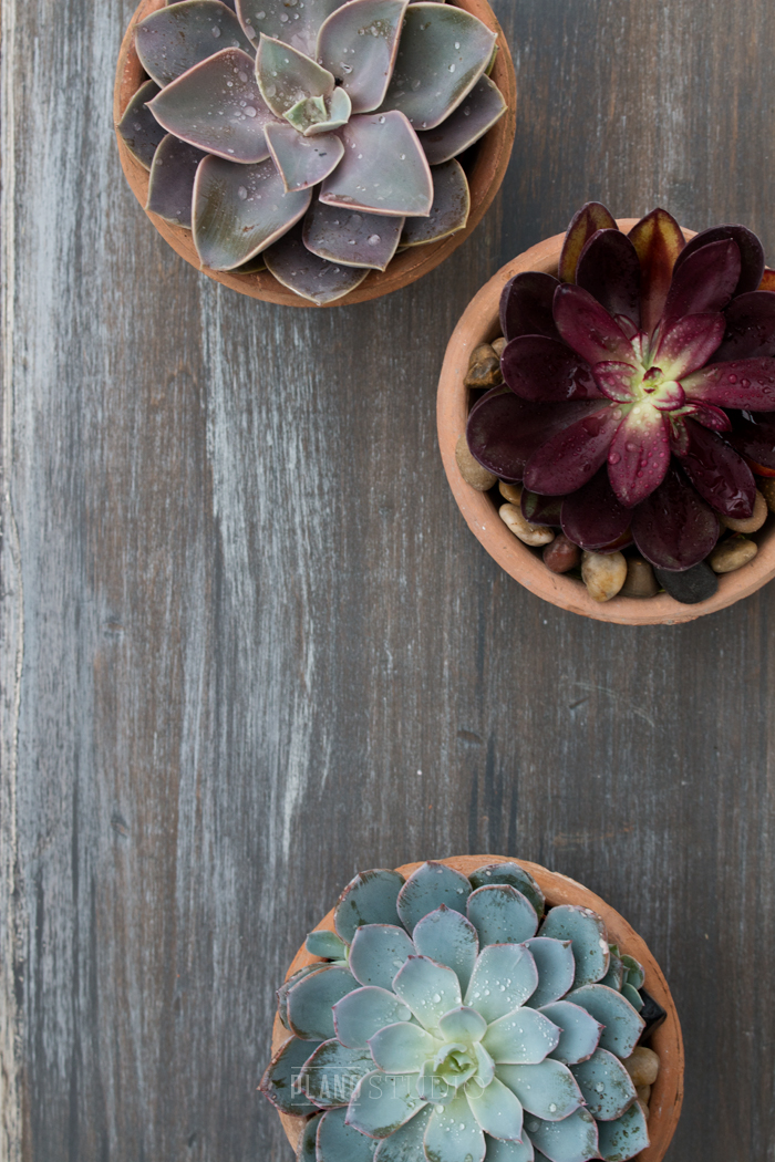 How To Make A Barn Board Background | Planq Studio | Barn boards are a must-have in a photo stylist's prop closet. This post has easy instructions to make your own!