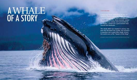 whale_of_a_story-HEADER.jpg