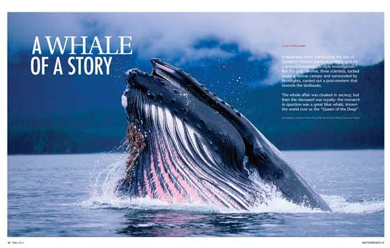 Watershed Magazine  - Fall 2016