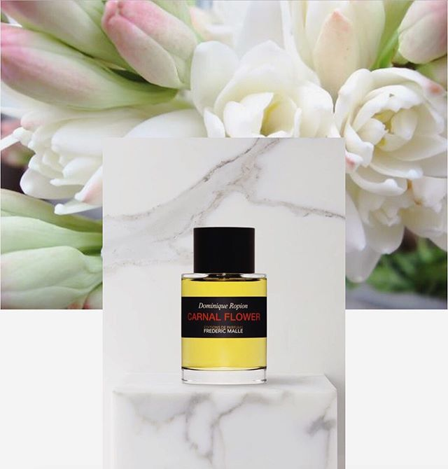 I can't help but be seduced when a perfume's name summons its fragrance perfectly —what's the scent version of onomatopoeia? CARNAL FLOWER by @fredericmalle is precisely what it claims to be: a bodily rendition of a dizzying flower, a belle in a ball gown walking through a urine-caked subway. It's beautiful and vulgar at once, fatty and fresh, a tuberose thickness lifted  by a highlight of eucalyptus. Apparently young women in the Victorian era were forbidden from roaming tuberose fields at night, lest they be beguiled by the fragrance into sinning. Sin away, says Carnal Flower. The better stories to tell your grandchildren.  _ @fredericmalle • composed by #dominiqueropion • melon, eucalyptus, ylang-ylang, jasmine, tuberose, orange blossom, coconut, musk. • $355 CAD / 50ml (sob)