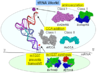 tRNA_world.png