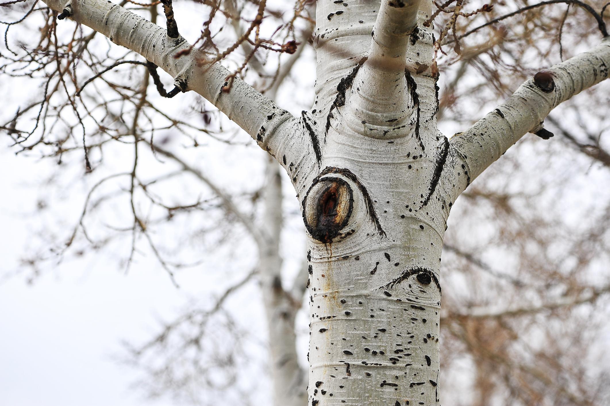 Tree Health Assessment