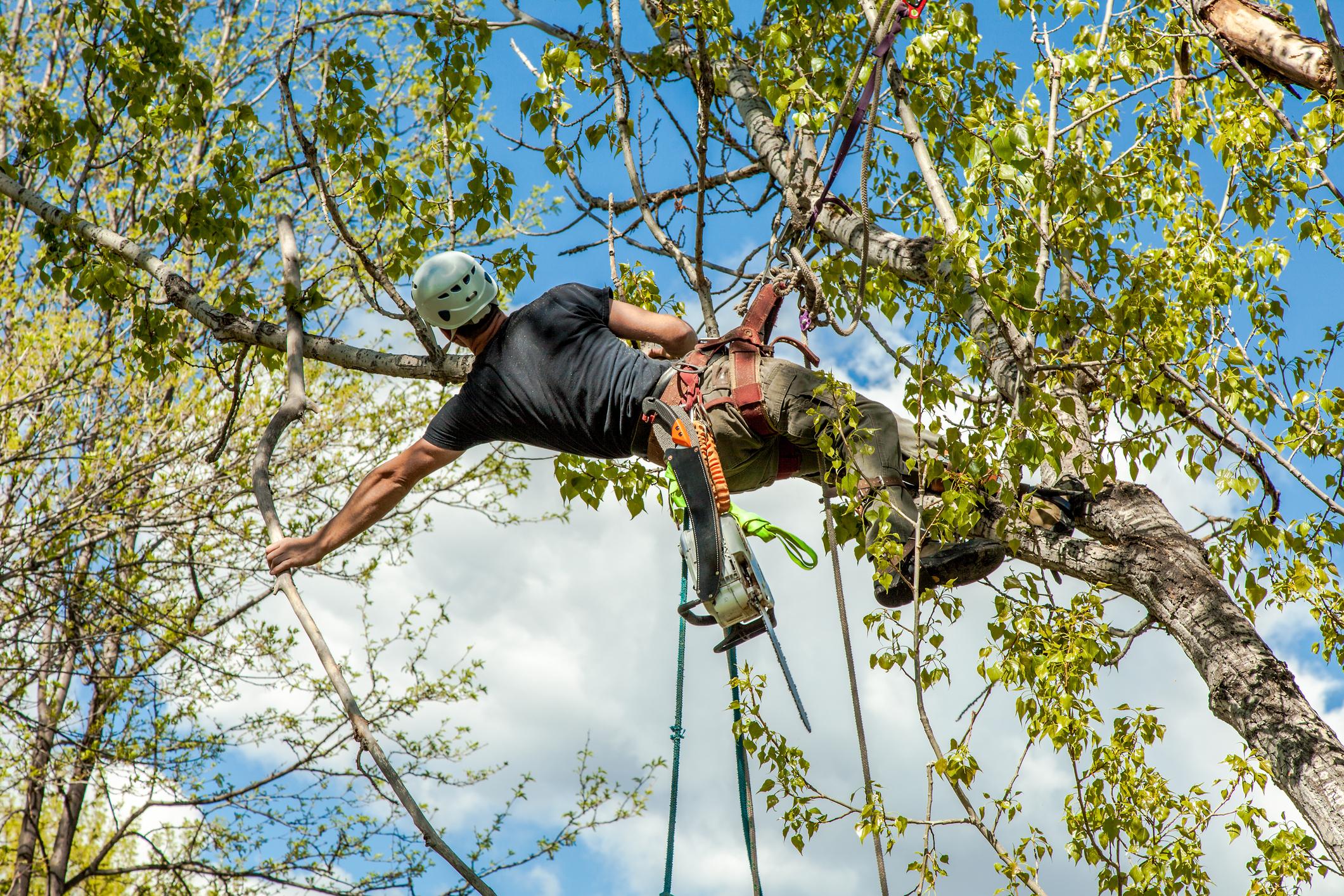 Tree Pruning & Maintenance