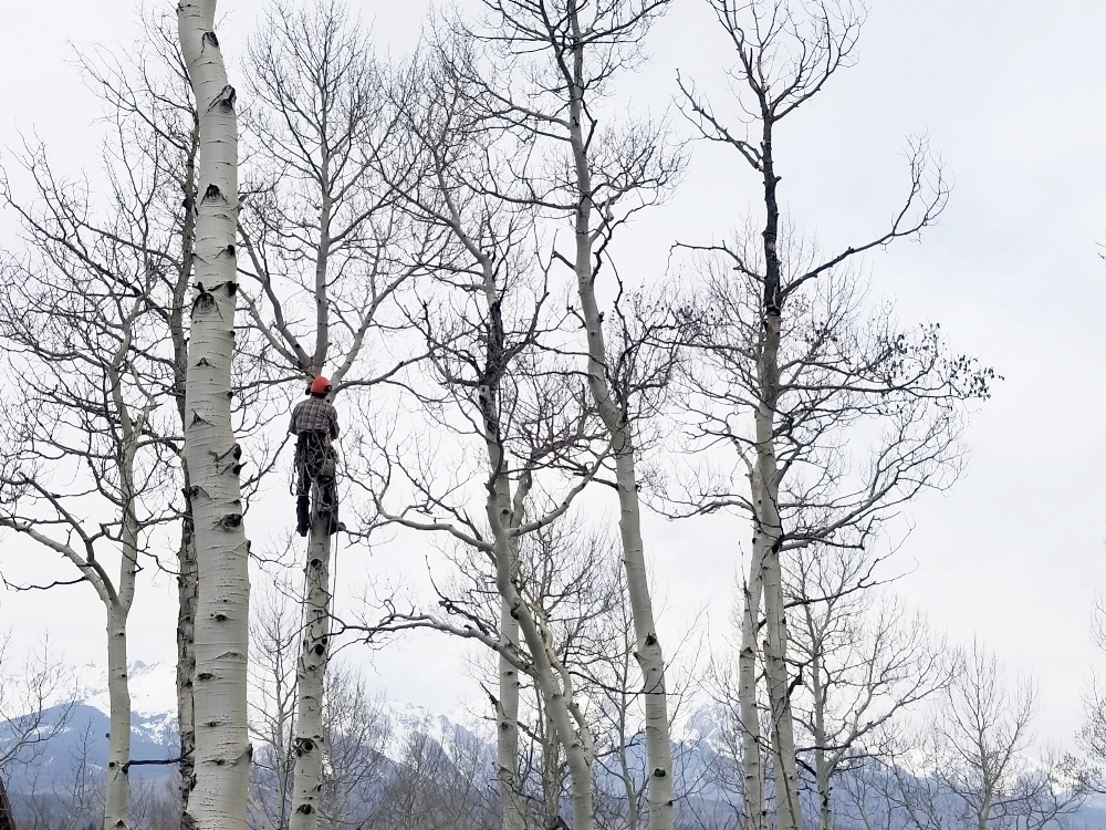 Eagle County, CO Tree Services - If you need tree service and you live in Eagle County, CO. Beetle Kill Tree guys now offers services in Vail, Avon, Edwards, and Eagle-Vail. Keep the trees at your home or business looking their best with our unprecedented expertise.We take pride in being attentive, organized, and just plain good at what we do. No matter the size of the job, Beetle Kill Tree Guys will have your tree service needs in Eagle County right the first time.Call today or Request a Free Estimate.