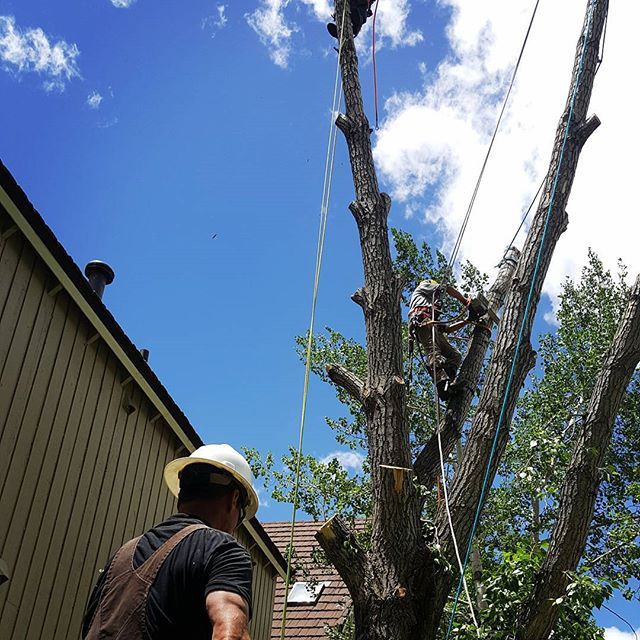 Summit County, CO Tree Services - If you live in Frisco, Breckenridge, Dillon, Keystone, or Silverthorne, the Beetle Kill Tree Guys have been serving these communities since 2007. Over the last 10 years our services have remained constant in quality, safety, and thoroughness.We offer a host of tree services from pruning to hazardous tree removal, fire mitigation and defensible space. The health of your trees and the safety of your home is important to us.Call us today or request a free estimate