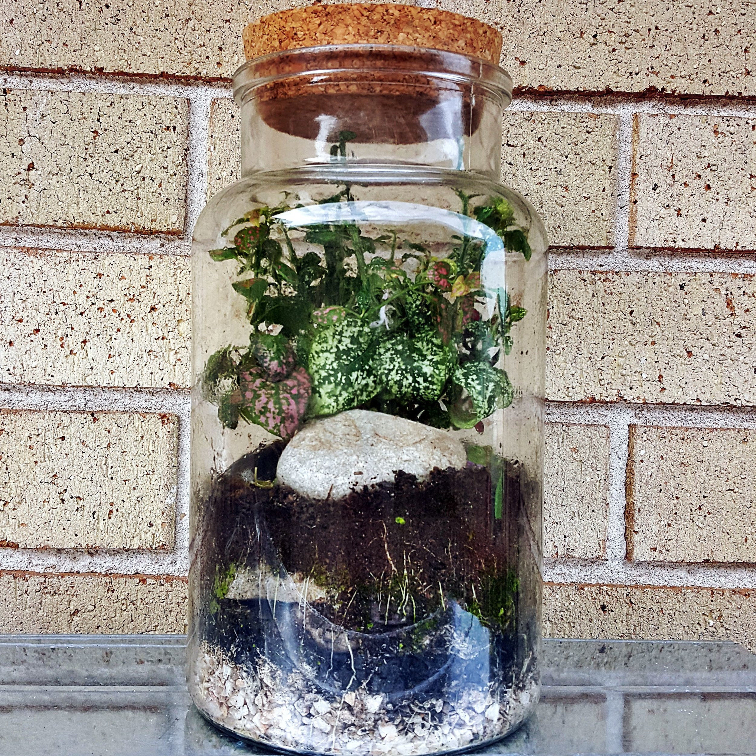 Pre Order Closed Terrarium Large Whistle Page