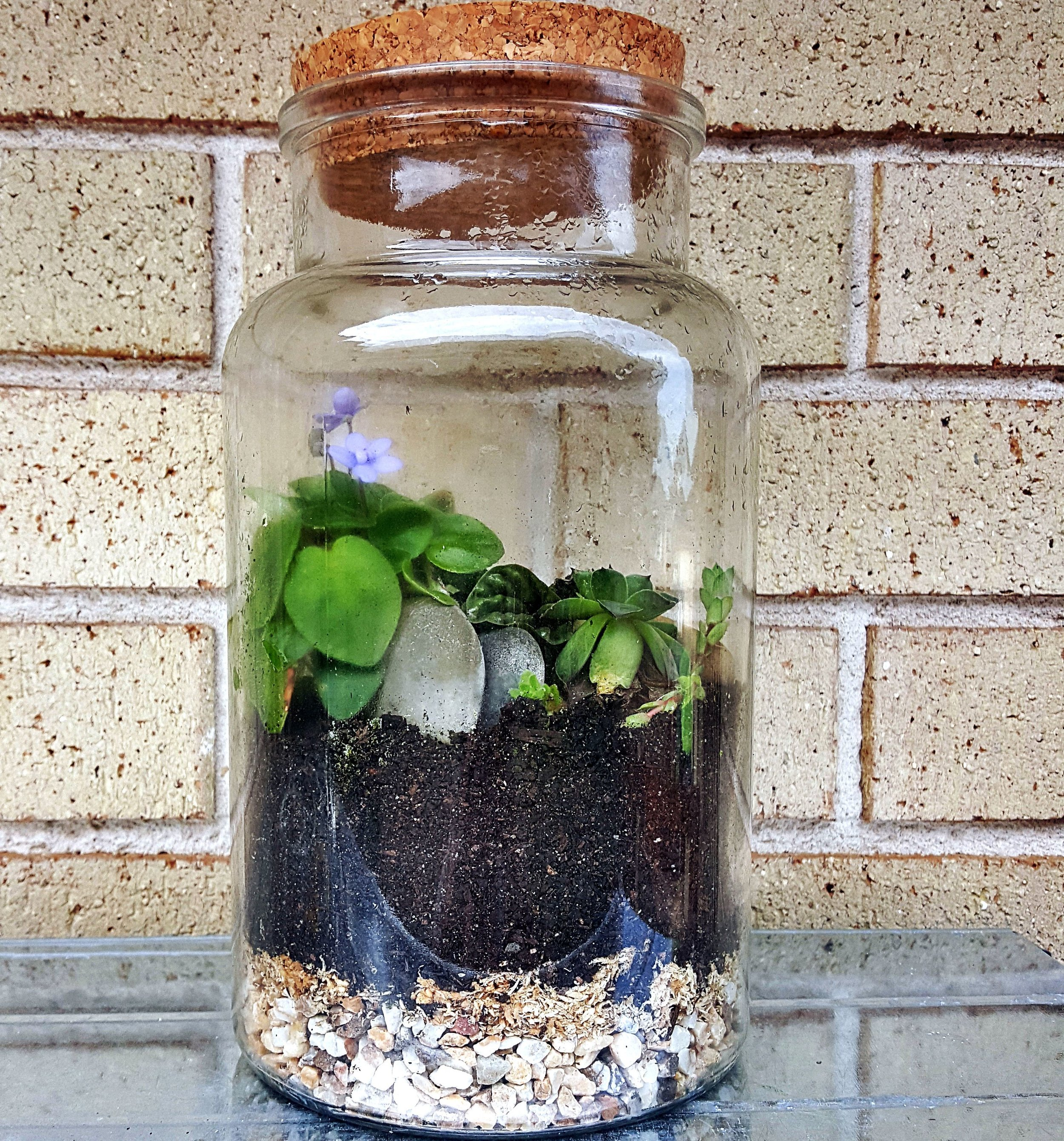 TERRARIUM - Light: Place your terrarium in a bright, warm and sheltered spot. Ideally, a metre or two away from a north-facing window. If you notice the soil drying out or the leaves looking scorched, consider moving it to a cooler spot. Water: Your terrarium is mostly made up of humid-loving plants which, we monitor for a few weeks. This is to ensure it gets the best chance at life. During this time, we establish a water-cycle, creating an ecosystem within the vessel. Developing a good ecosystem means that your terrarium rarely needs to be watered. If the soil looks dry, lightly mist your terrarium. Give it a few days and mist again if required. Often, your terrarium will not need watering for months at a time, or at all.Prune: We use slow growing plants to create your terrarium however like us, all plants are different, and some may decide to have a sudden growth spurt. Don't panic though, just open up your terrarium and give it a trim. It is also important to discard of any dead or decaying leaves. This will help keep your terrarium clean and healthy.