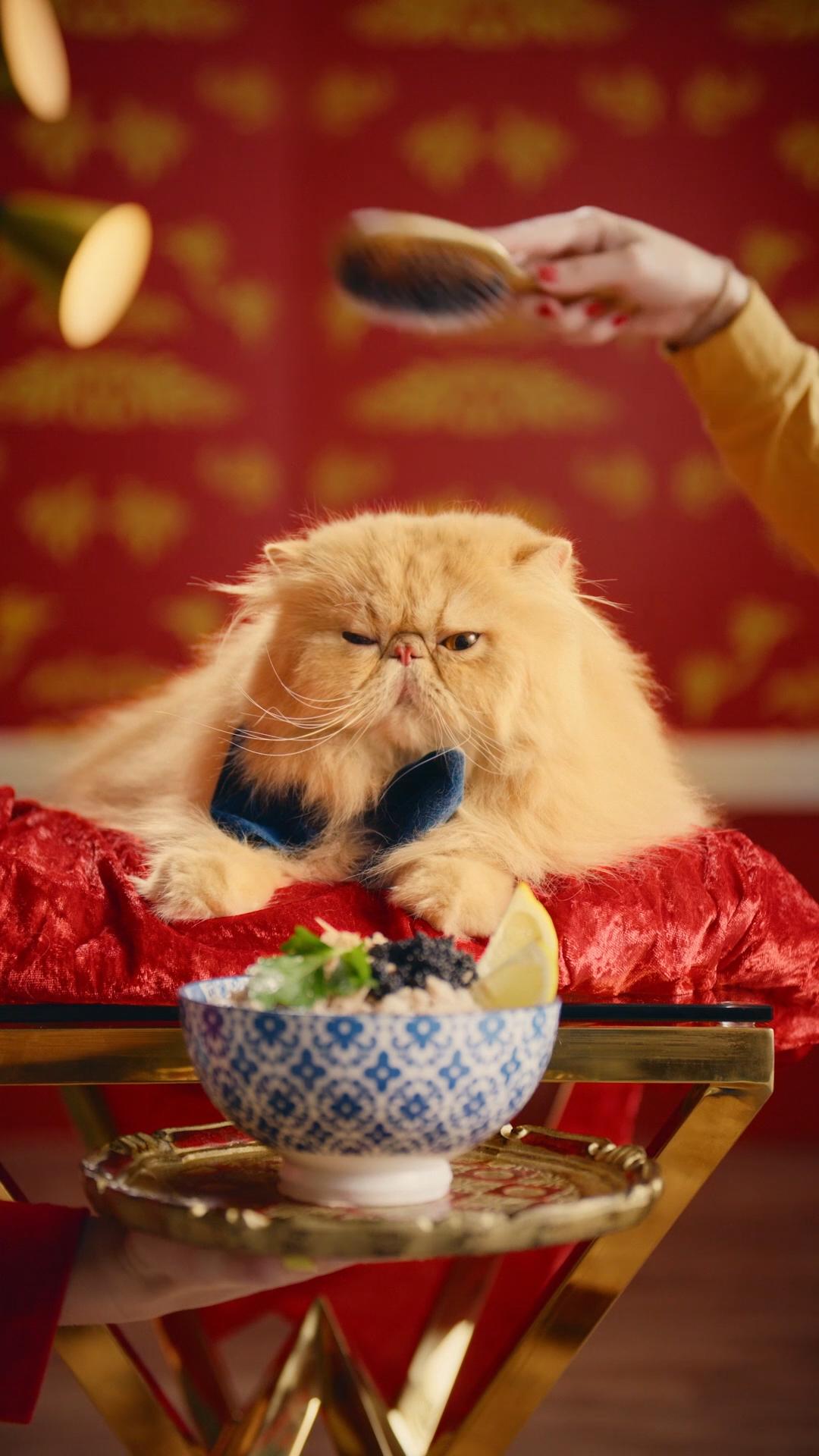 Cat_13.jpg