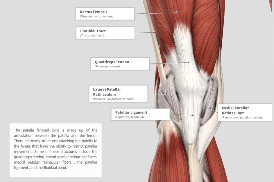 Image via Complete Anatomy 2018 by 3D4 Medical