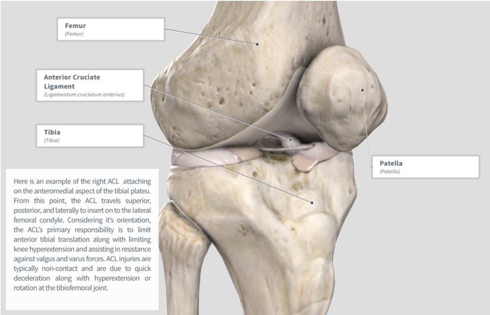 Image via Complete Anatomy by 3D4 Medical