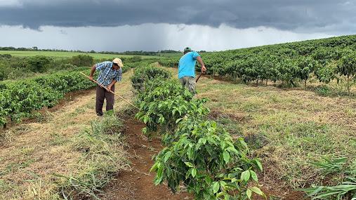 Coffee Farming in Brazil
