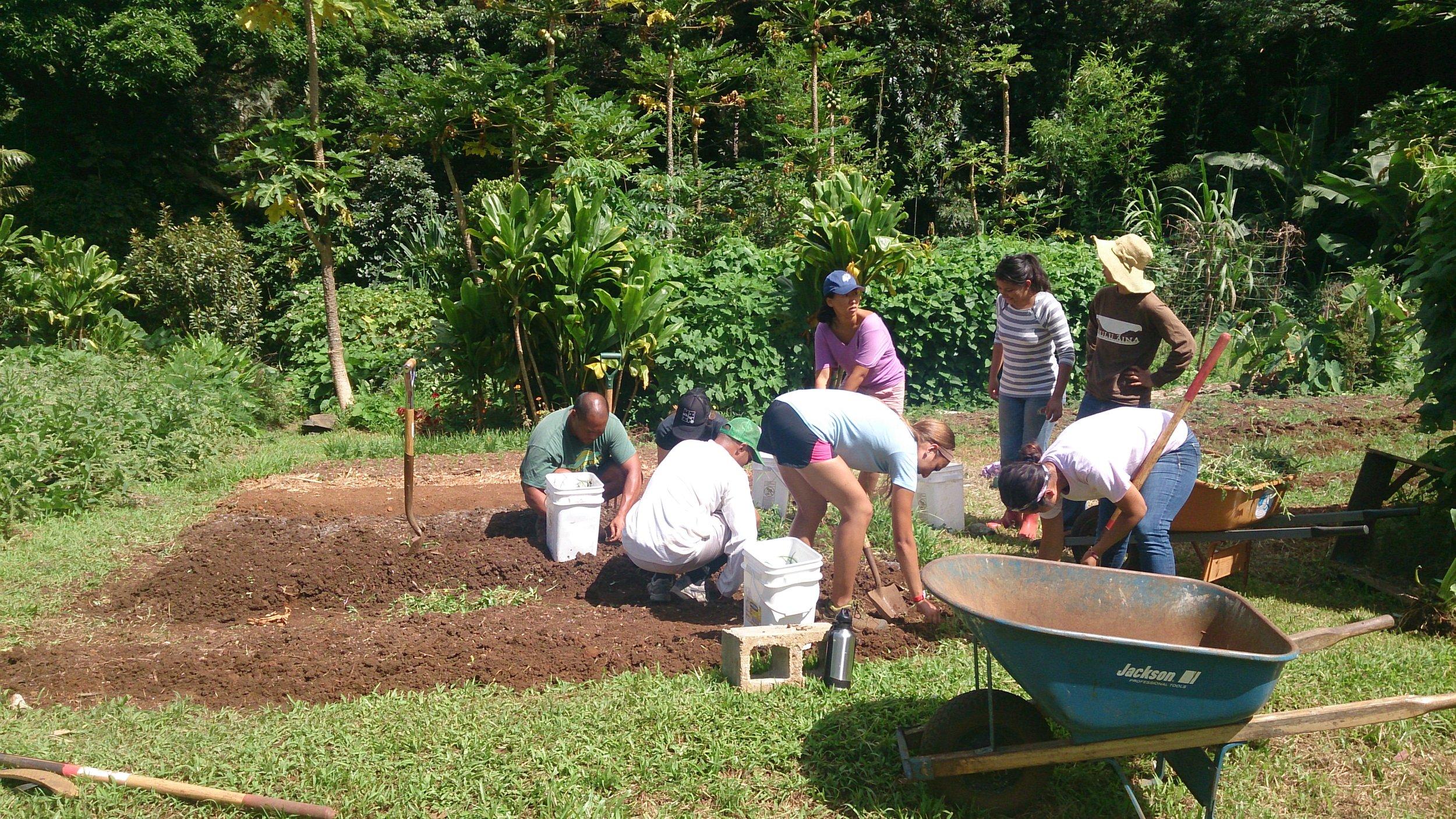 Mahi Aina Community Garden Workday Roots KKV