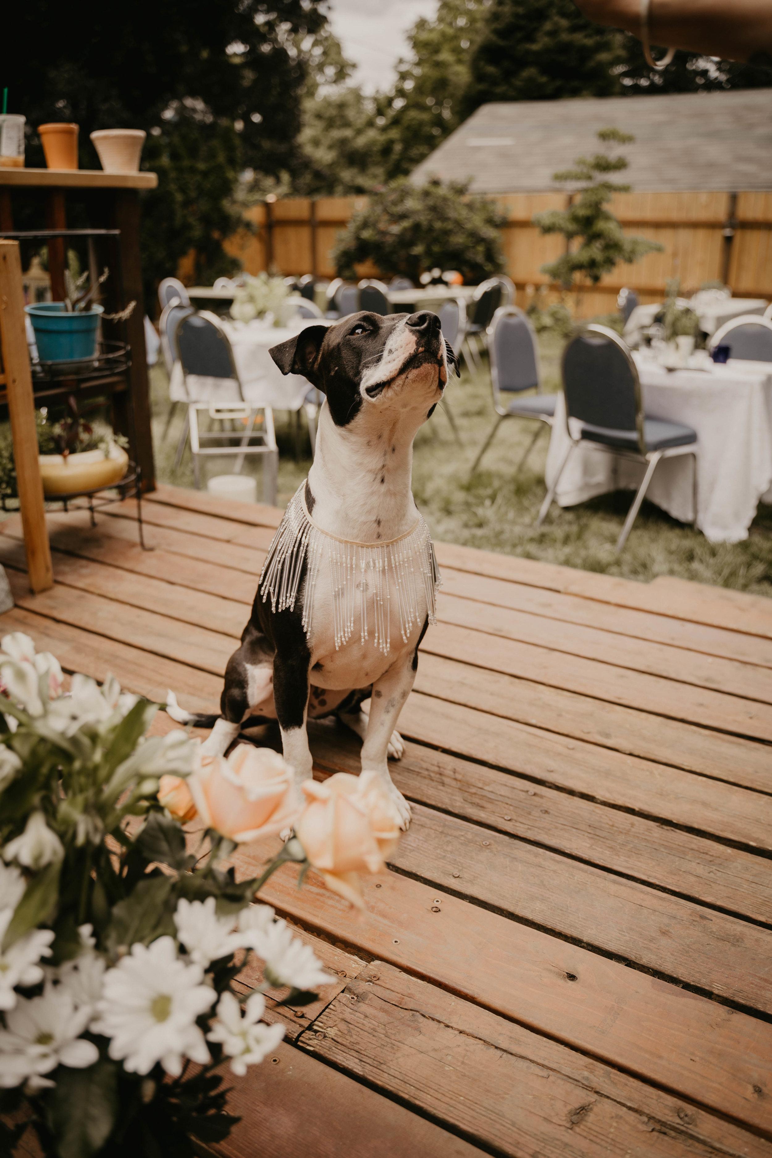 Colorado wedding videographers (69 of 394).jpg