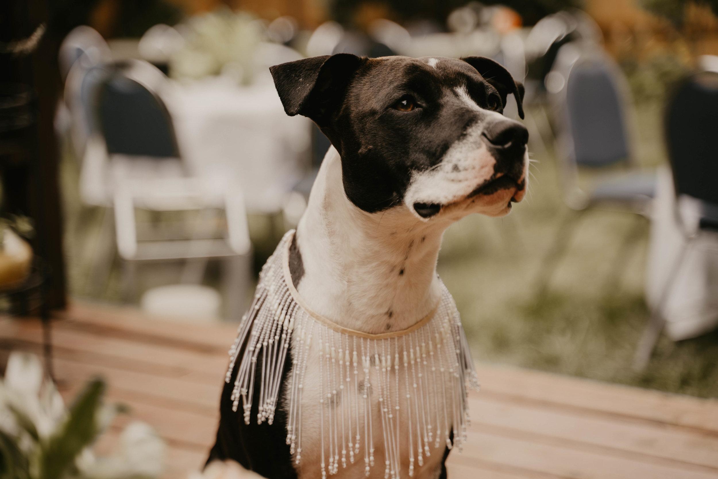 Colorado wedding videographers (71 of 394).jpg