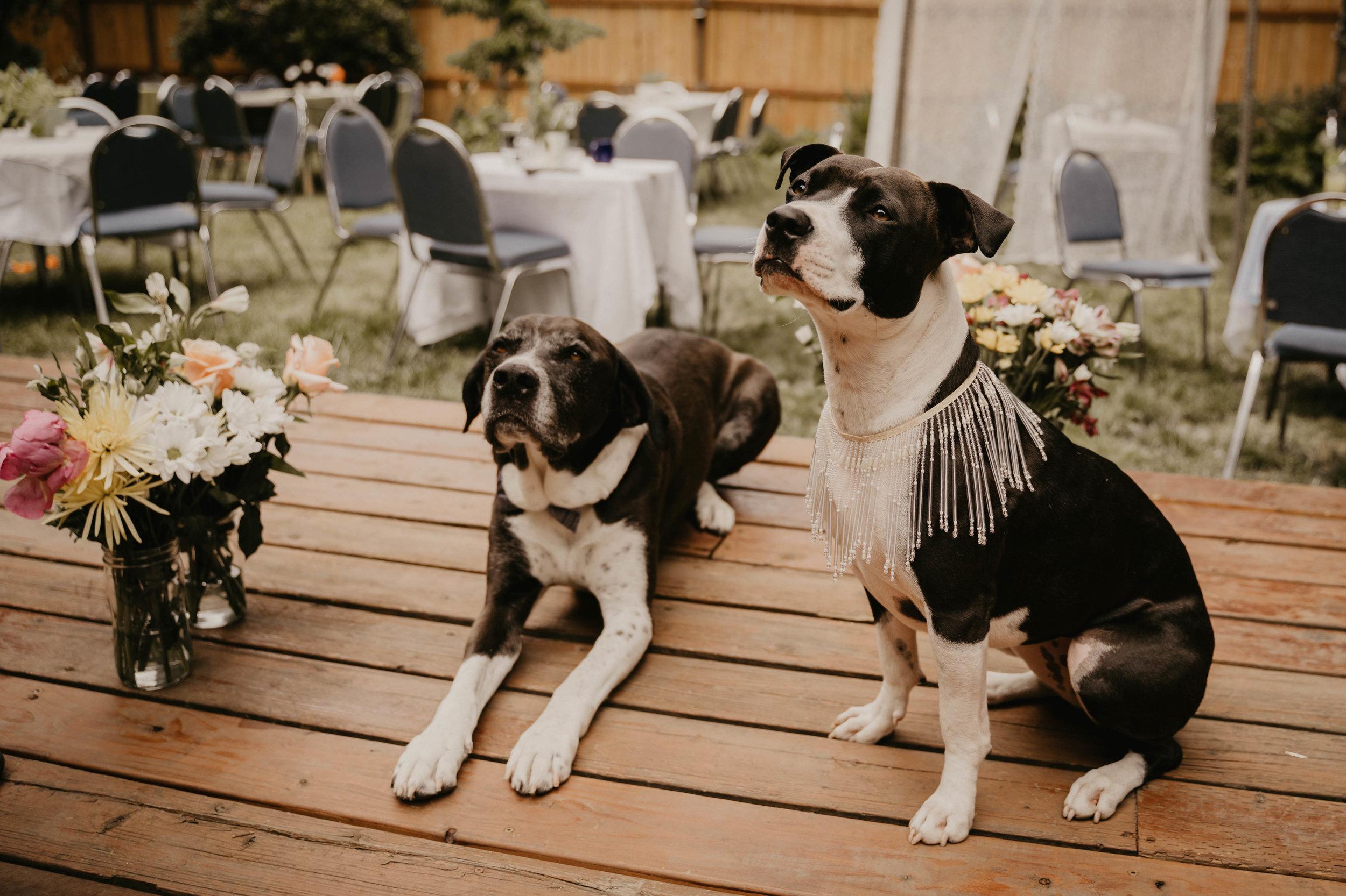Colorado wedding videographers (77 of 394).jpg
