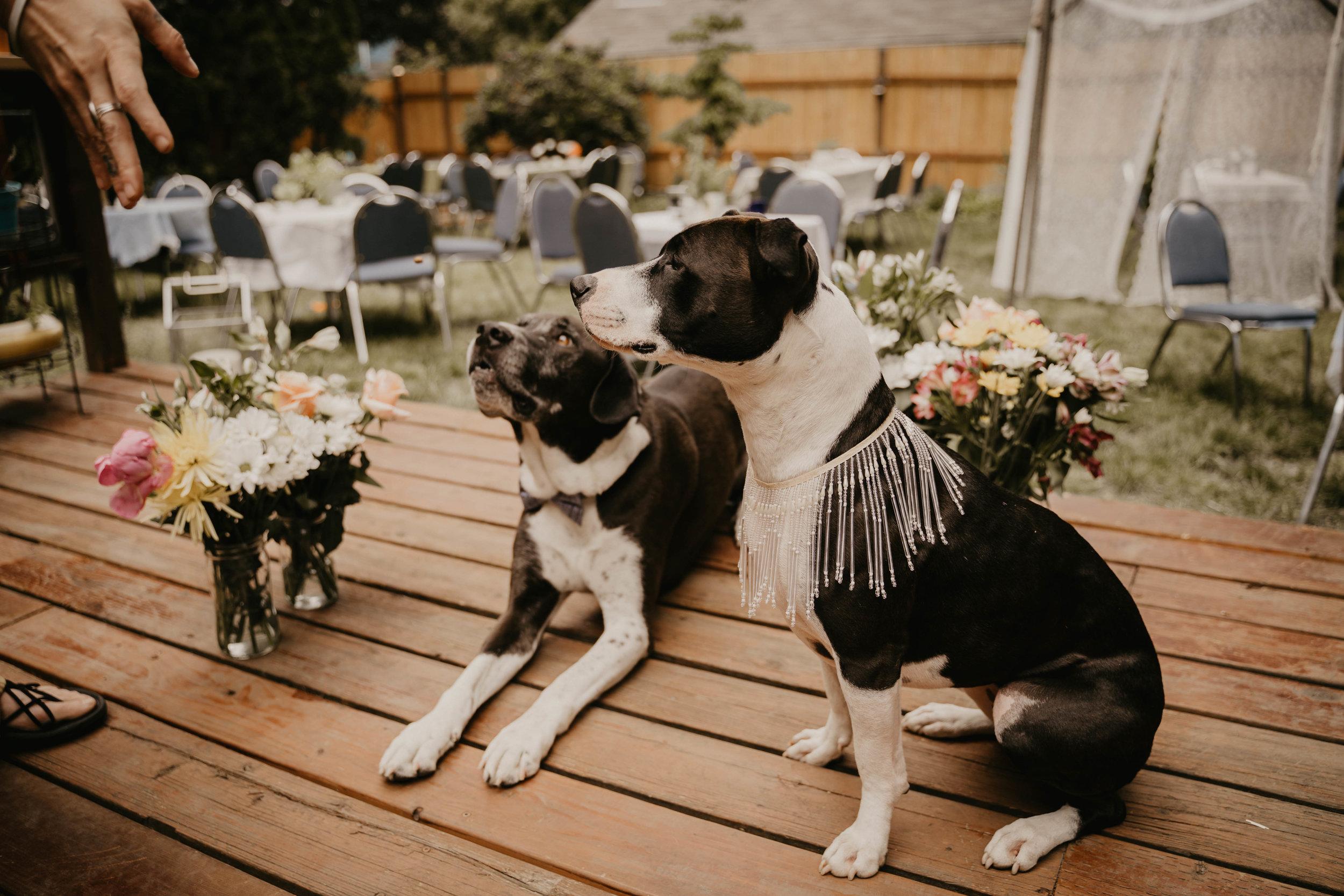 Colorado wedding videographers (78 of 394).jpg