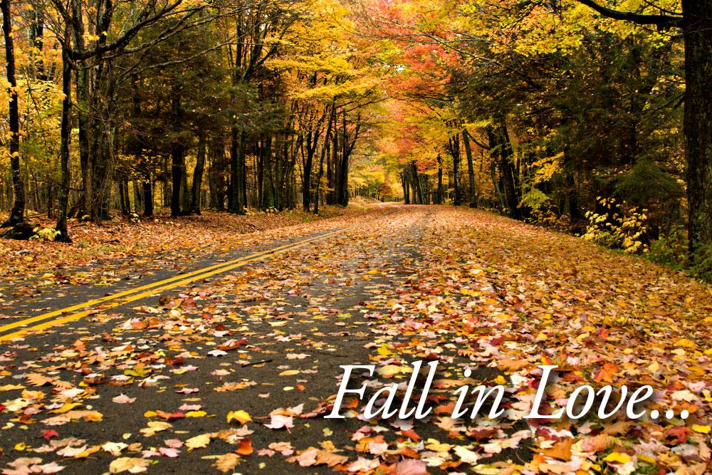 Fall-Road-in-Love.jpg