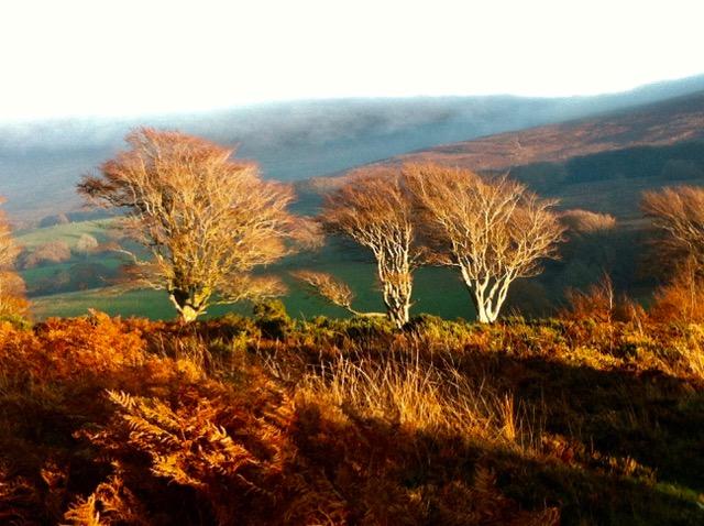 Landscape near the Linhay Studio on Exmoor.