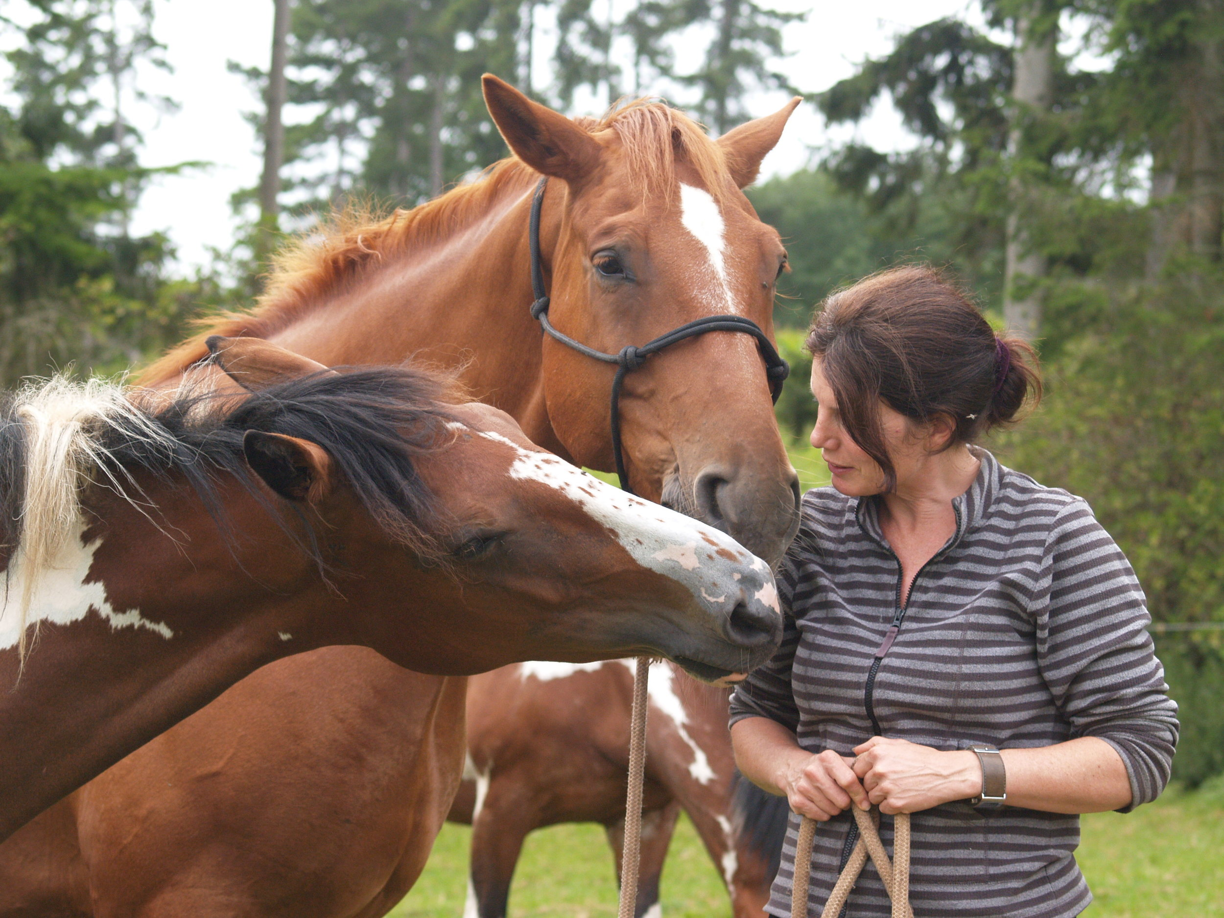 miranda-carey-horses.jpg