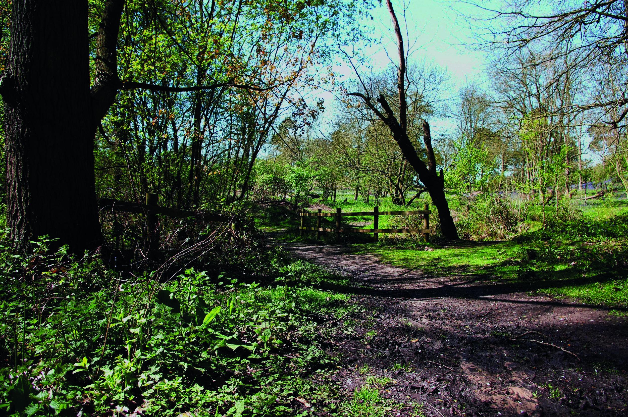 Langdon Hills.jpg