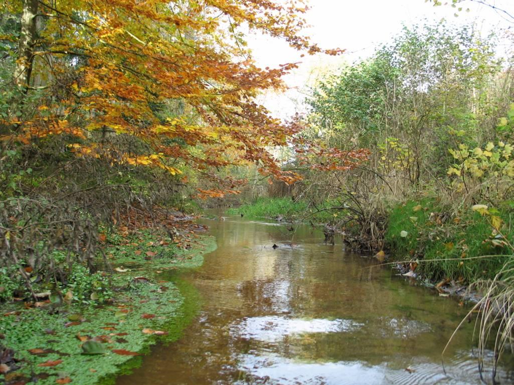 Flot vandløb med efterårsfarver.jpg