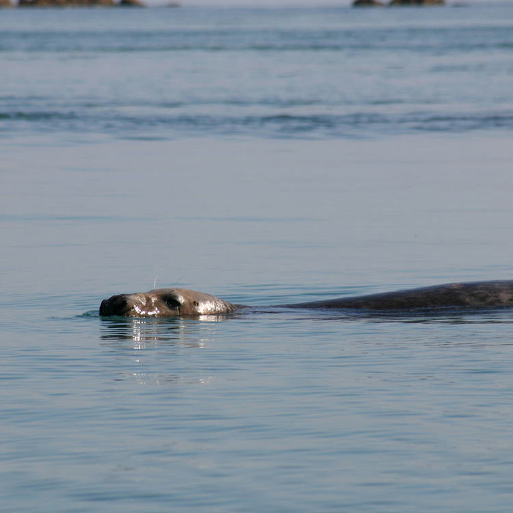 seal spotting wildlife Jersey