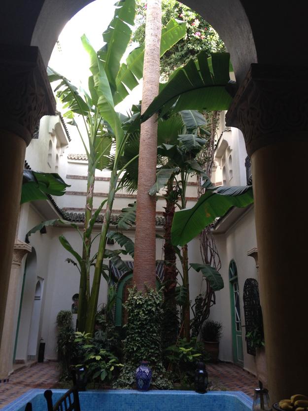 Morocco_Tree.png