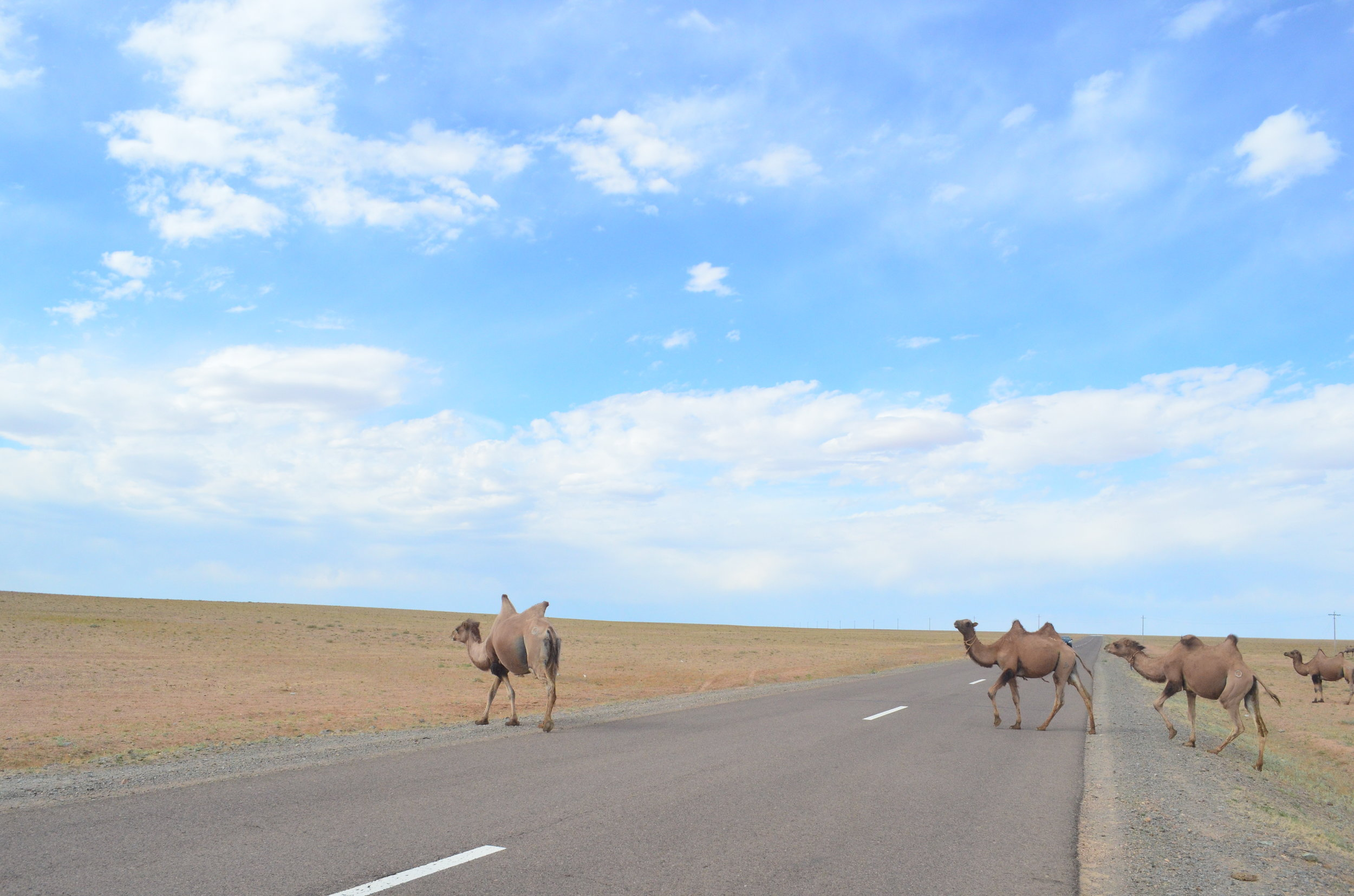 Camel-Xing-Gobi.JPG