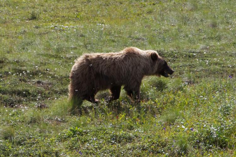 bear--1_MG_7124.jpg