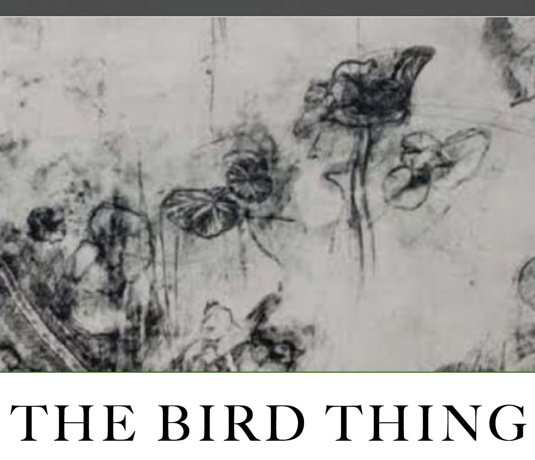 The Bird Thing  Read  The Bird Thing  in  The White Review   here