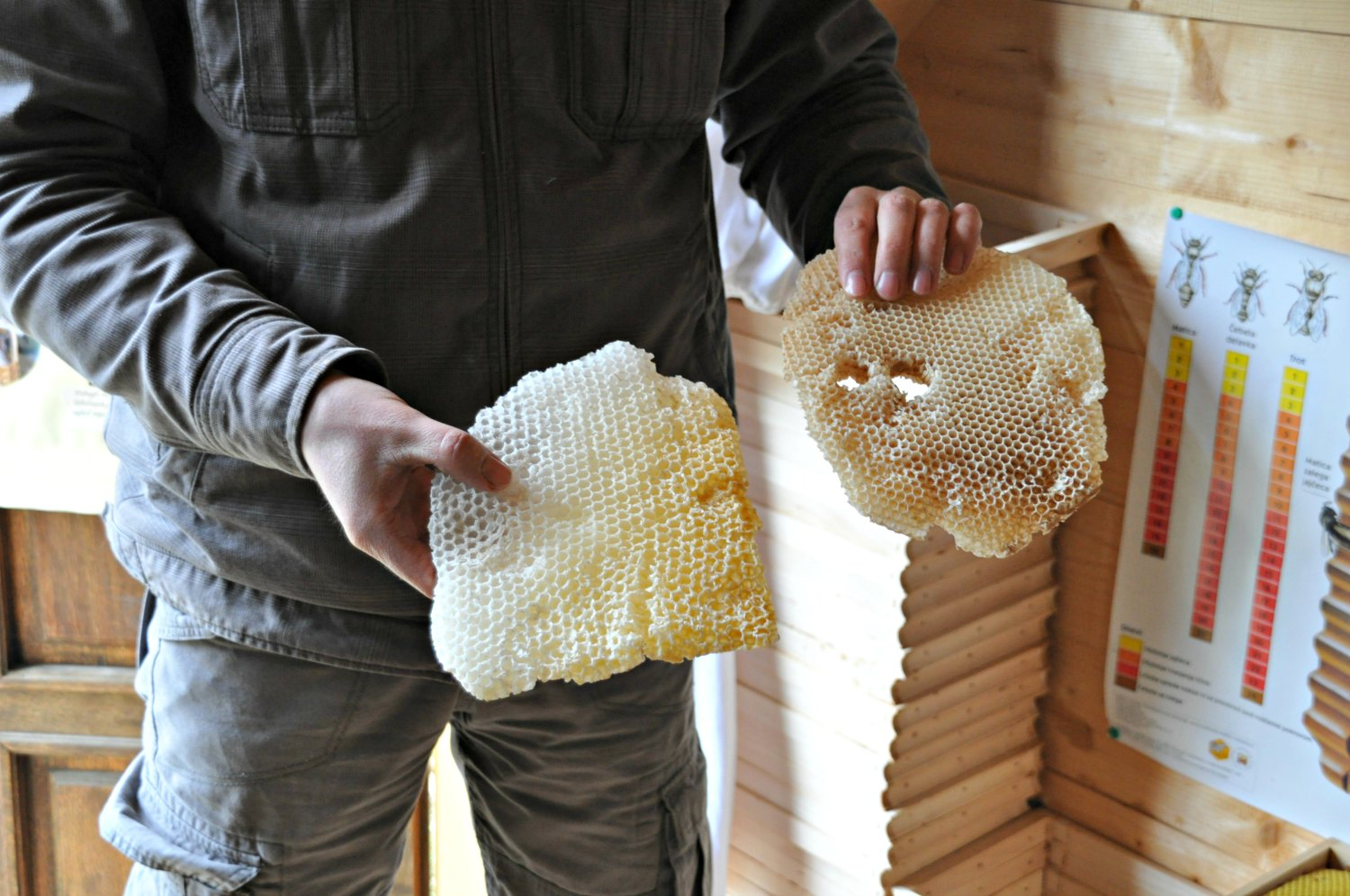 Learning about Slovenian beehives.jpg