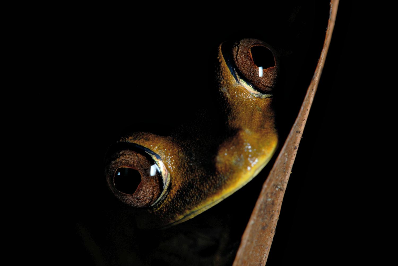 Tree frog. Photo: Hitesh Mehta