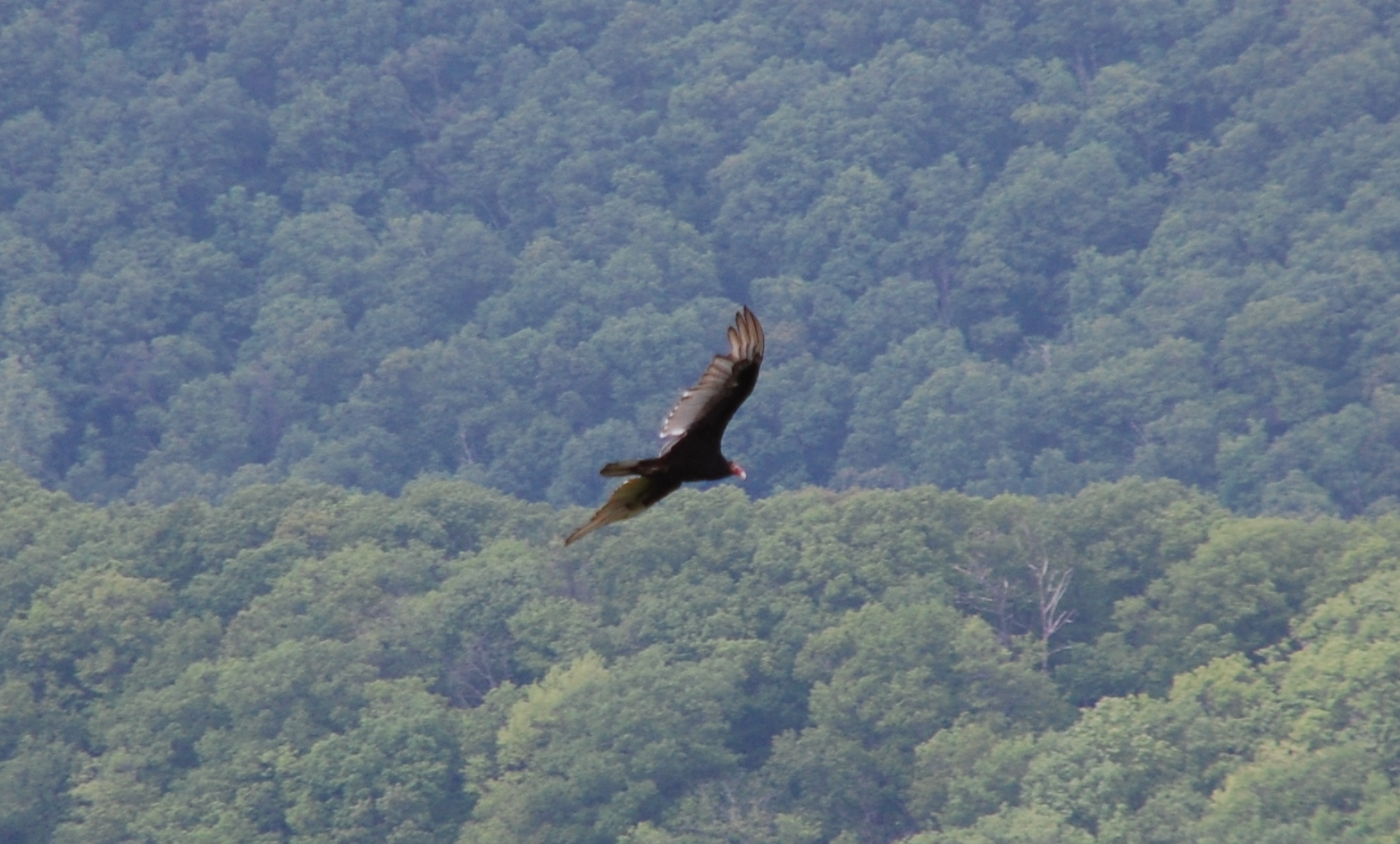 birds at shenandoah national park