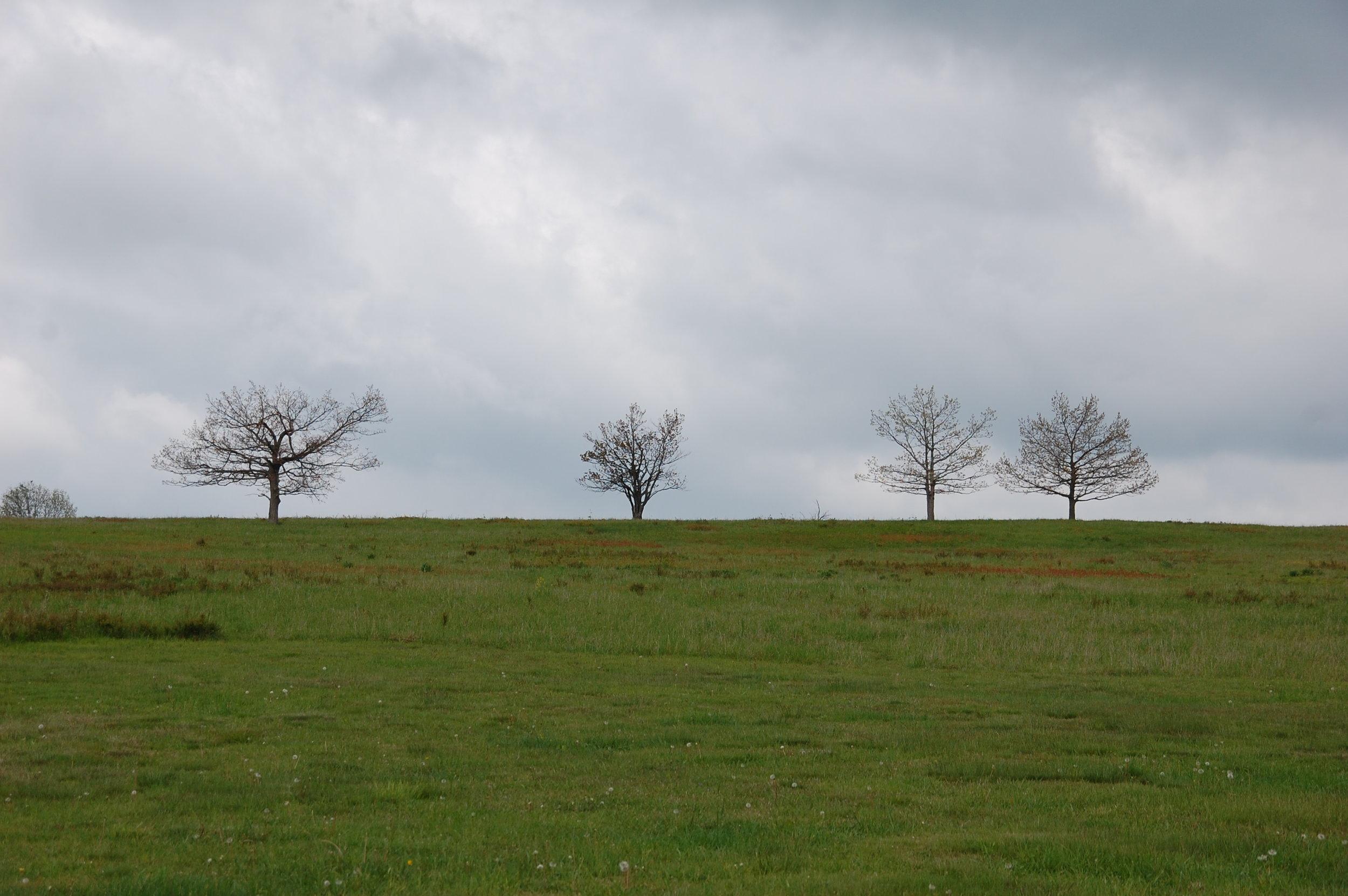 trees from skyline drive shenandoah