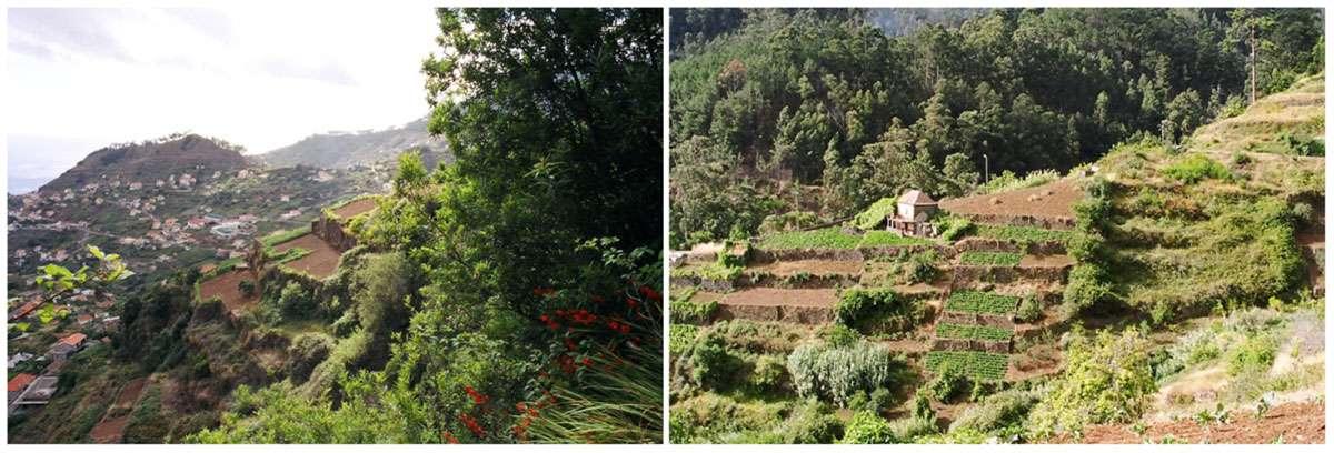 Madeira farmland and landscape