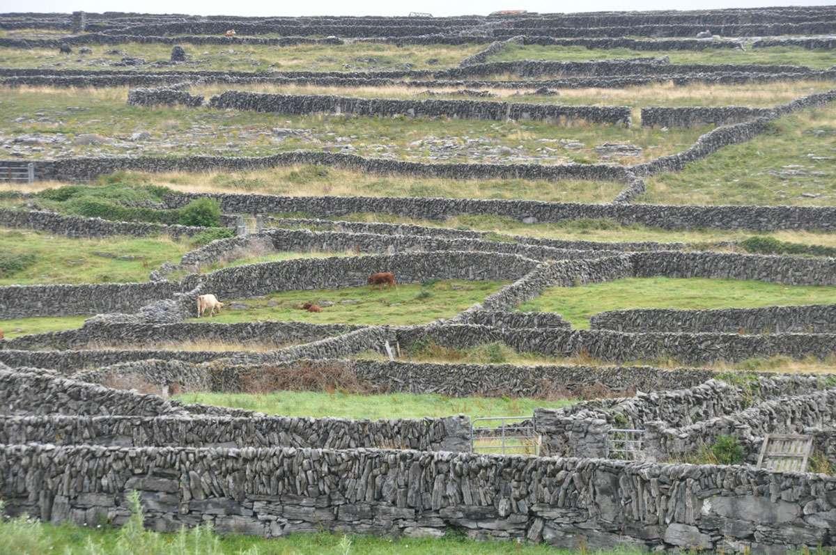 the stone walls of Inishmaan island