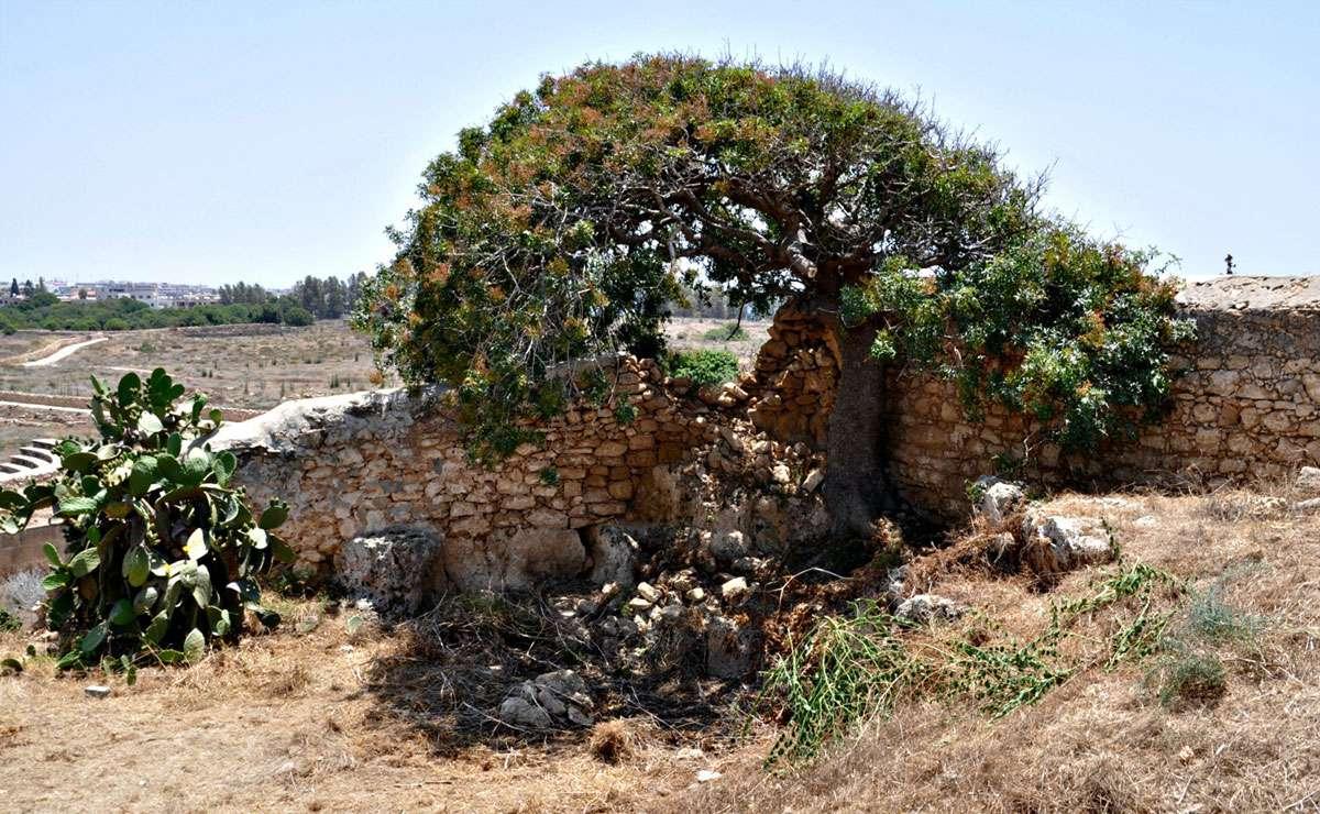 cyprus-ruin.jpg