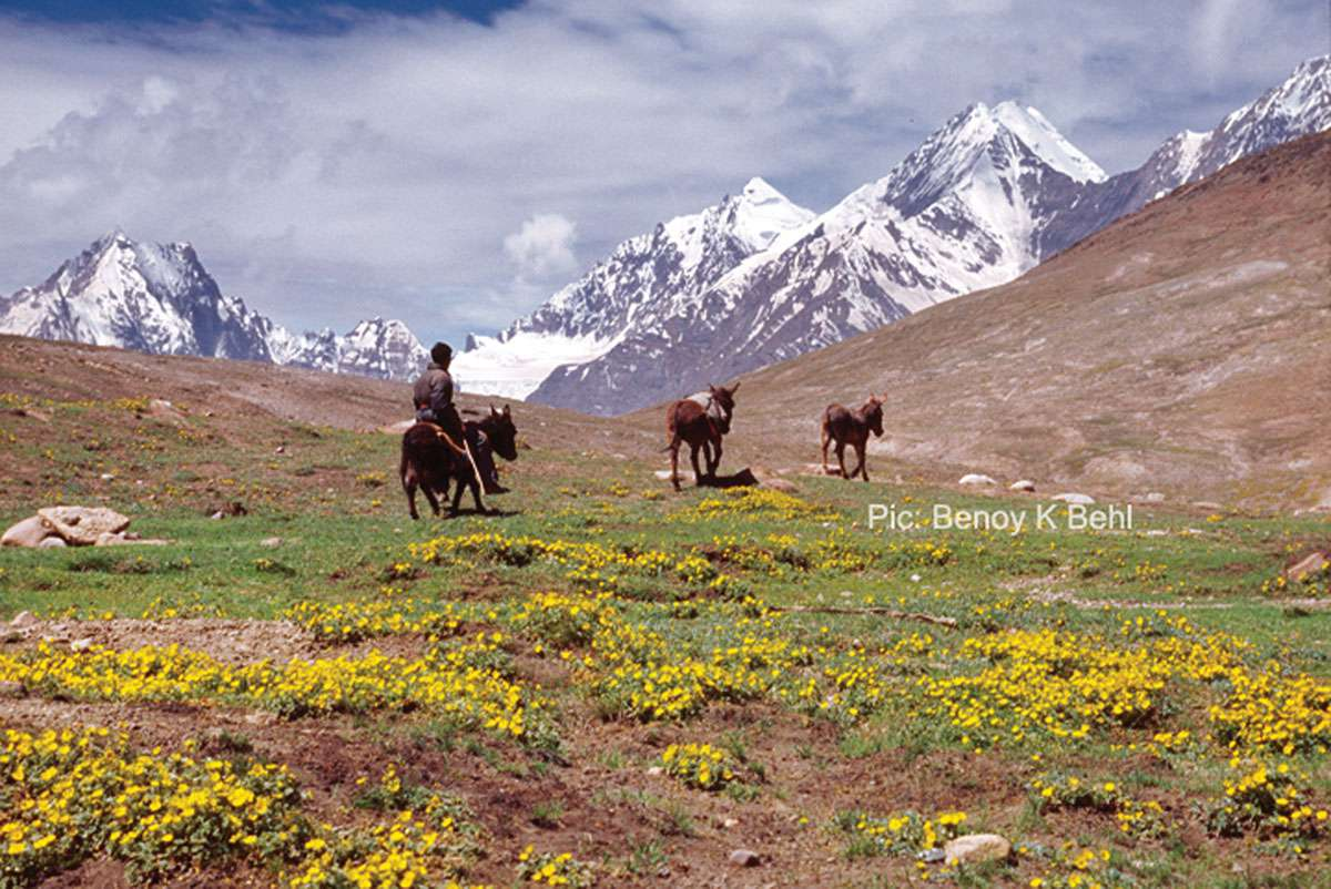 Near a High-Altitude Pass, Kinnaur, India. Benoy K Behl