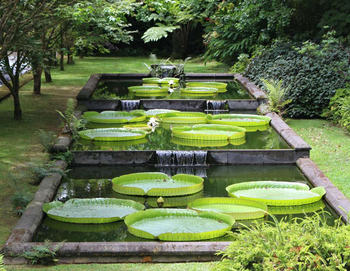 The gorgeous Victoria Cruziana Orb water lily garden at the entrance to Terra Nostra Gardens. Photo: Meg Pier