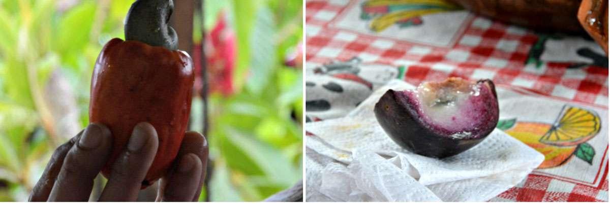 Indigenous fruit; strange looking but beautiful tasting. Photos: Meg Pier