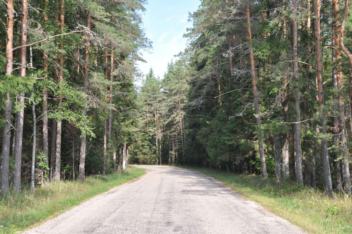 Pine-lined road along Estonian-Russian border. Photo: Meg Pier